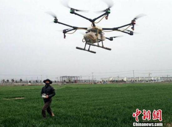 种植合作社数架植保无人机管护农田。