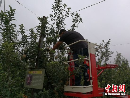 第28届丰县中国视频文化节开幕果迎耀华候八方苹果图片