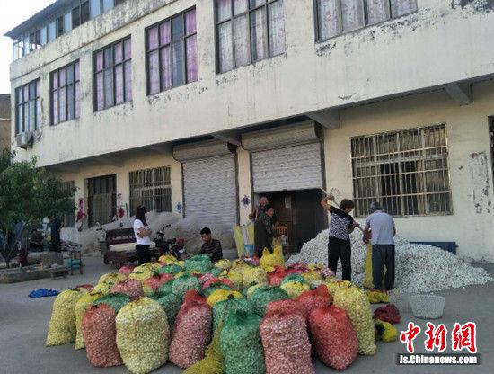 睢宁县桃源镇蚕农喜获大丰收。