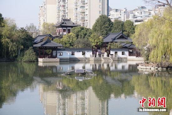 图为滨湖区水环境综合整治后景美水美。