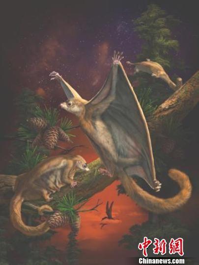 图为侏罗纪滑翔哺乳形类动物――似叉骨祖翼兽生态复原图。赵闯 制图
