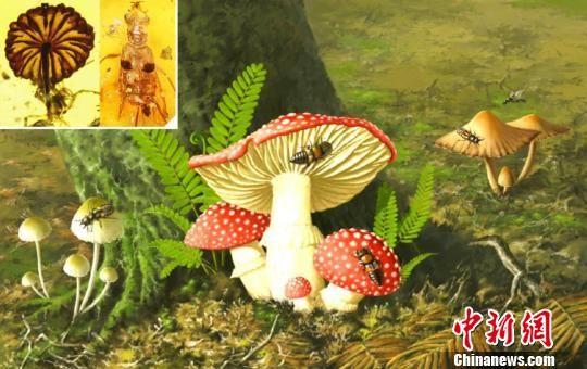 白垩纪中期巨须隐翅虫与蘑菇的生态复原图。中国科学院南京地质古生物研究所 制图