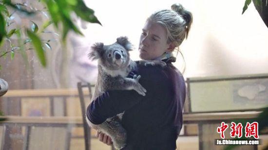 澳大利亚澳饲养员Ranae与考拉交流