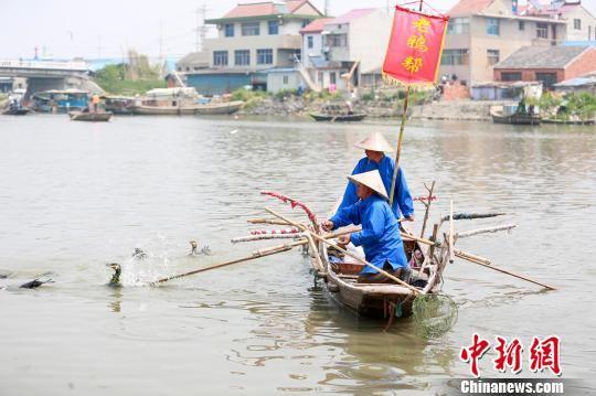 图为老鸦帮的渔民将老鸦放到河里捕鱼。 汤德宏 摄