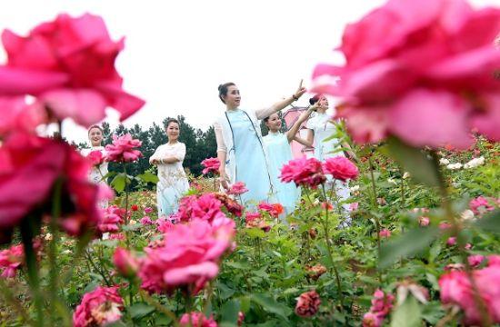 玫瑰花在春风里摇曳轻摆。