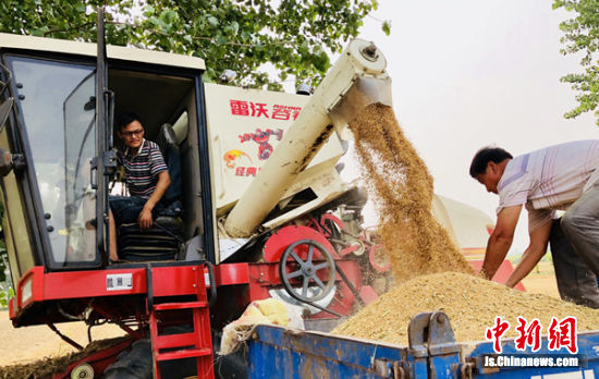 农机手姜威开着联合收割机在麦田里忙碌。庄学兵摄