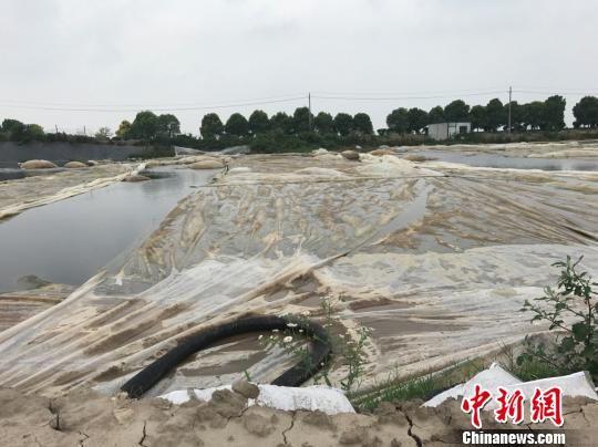 图为污泥堆存现场触目惊心。 官网截图