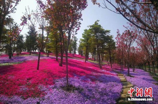南通洲际绿博园繁花似锦。 周 健 摄