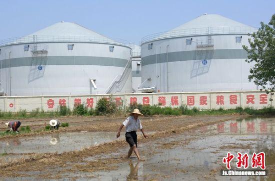 六月中旬,铜山区维维粮仓伊庄基地外,坚守农业一线的农民在插秧。
