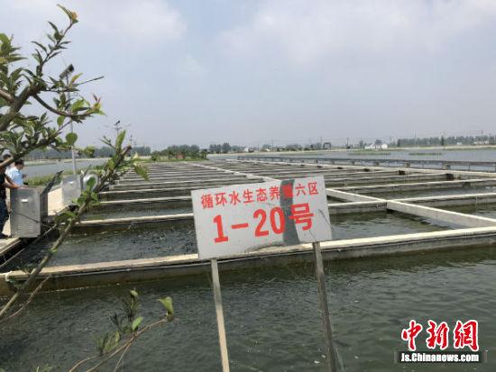 恒济镇池塘工业化生态养殖基地一角。
