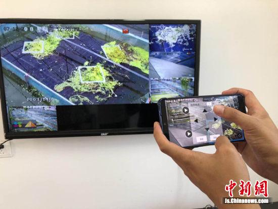 """高锋通过手机演示物联网养殖的""""要点""""。"""