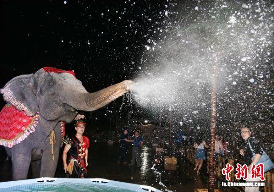 大象在表演节目。