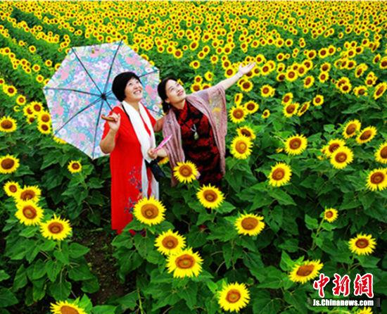 鲜艳的服装和色彩各异的遮阳伞为黄色的花海中增加了许多迷人的色彩。