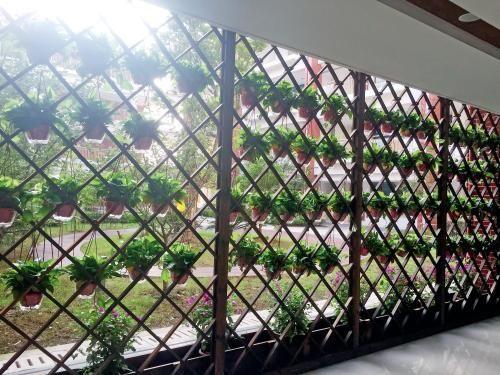 """站在立新小学""""借用""""的教学楼内,透过隔离栅栏可以看到勤惜小学的校园。为了美观,学校给这面栅栏挂满了花盆。"""
