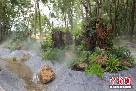"""【中国新闻网】4000平米神奇的""""蕨类世界""""亮相南京中山植物园"""