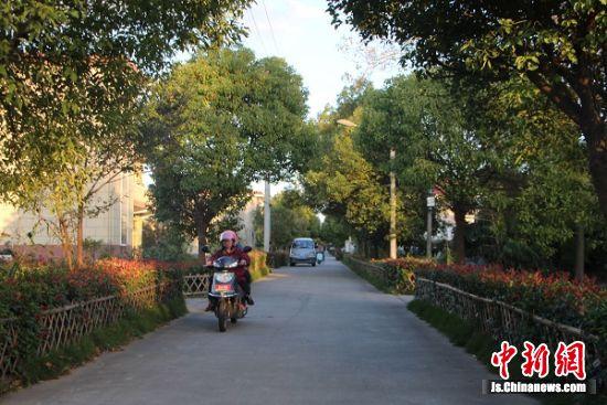 启东美丽的农村公路。 陆建国 摄