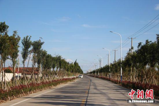 启东农路绿意盎然。 陆建国 摄