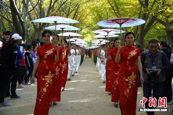 """在邳州铁富镇姚庄村天下闻名的银杏""""时光隧道"""",正在上演100余人的旗袍秀。"""