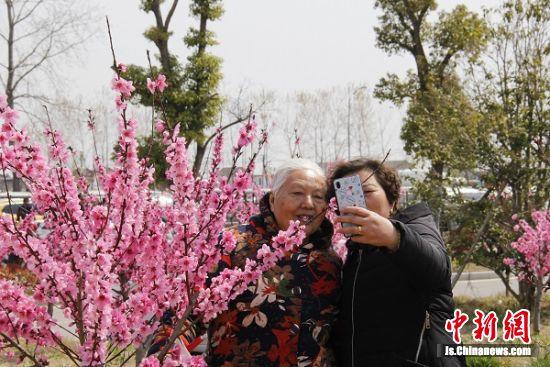 盛开的桃花陶醉了游客。