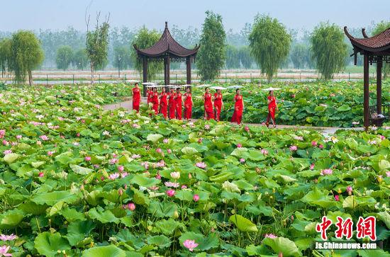 西顺河镇万荷园种植着八大色系48个品种的荷花。周太松 摄