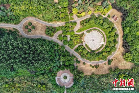 俯瞰长江岸边南京三桥湿地公园绿意浓浓。泱波 摄