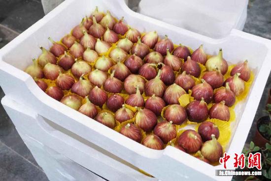 图为无锡农博会上的销售的无花果。