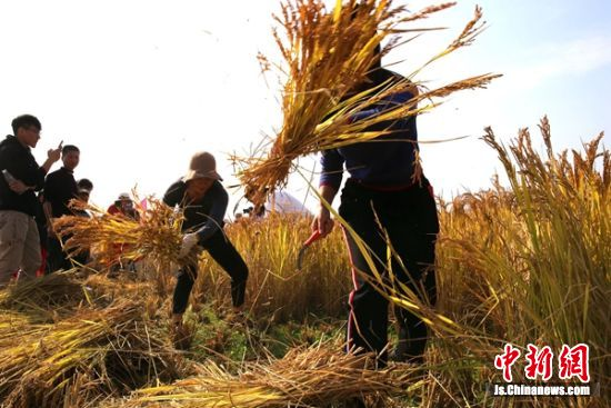 句容后白镇邀游客体验乡村之美 共庆农民丰收