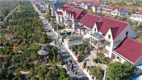 在如皋顾庄村,农民住上了一排排小洋楼(许丛军 摄)
