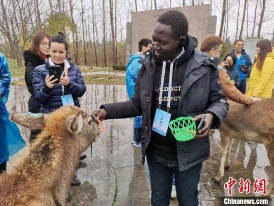 外籍友人与麋鹿亲密接触。 谷华 摄