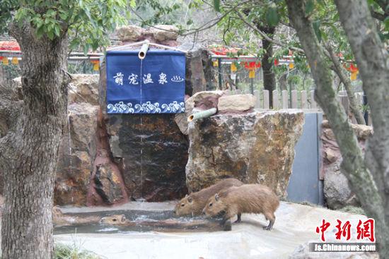 萌宠温泉开张。