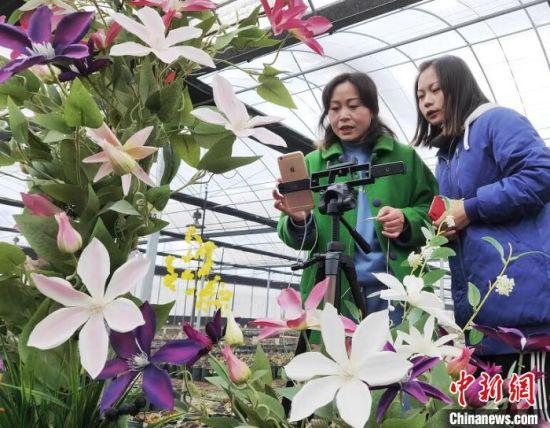 赵紫�u与妈妈一起在直播间卖力推荐自家种植的铁线莲。 丁华明 摄