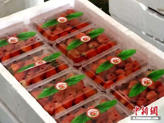 工人把草莓分拣好,精包装后运往超市销售。