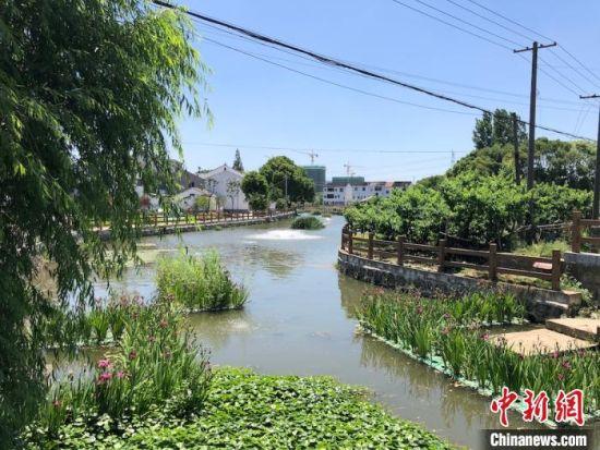 青龙桥河河道两边草木葱茏。 孙权 摄