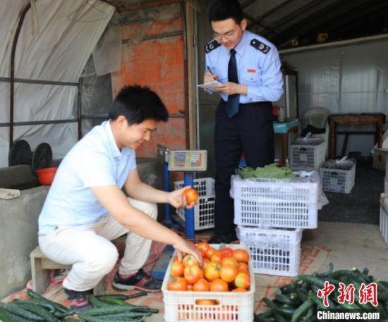 """""""90后""""的新农民童冬,在细心挑拣蔬果。通过冷链物流车,新鲜的农副产品在几个小时里就能送进城里的超市菜场。 孔燊 摄"""