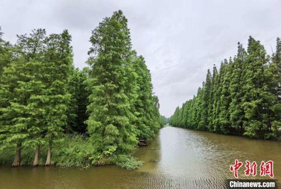 水上森林景区。 刘乐凯 摄
