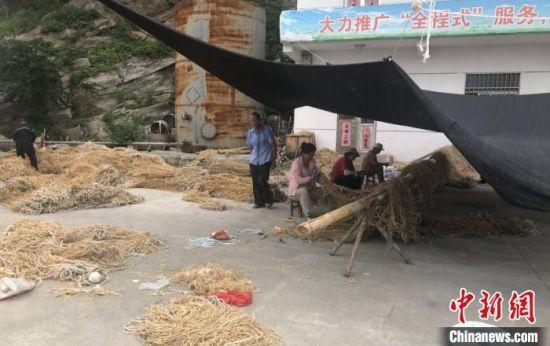 正在整理紫菜养殖用具网联的村民。 于从文 摄