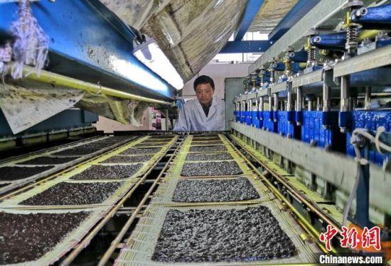 紫菜加工生产场景。黄窝村供图