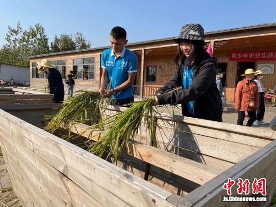 学生们在实践教学指导教师带领下体验割稻穗、打稻谷等农活。盛秋玲 摄