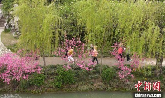 """""""三步一桃,五步一柳""""是瘦西湖春景的极致。 张衡 摄"""