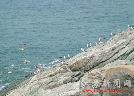 候岛迁徙经海岛 守岛部队禽流感预防工作