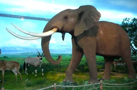 国内最大的非洲动物标本展馆