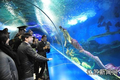 盐城大丰海洋科技馆上演人鲨共舞(图)--江苏新