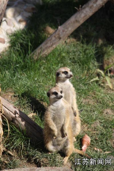 也让这些可爱的小动物能与小朋友们近距离相处.