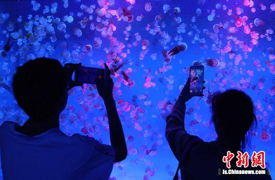 水母在水母缸中整齐曼妙的跳动。泱波 摄