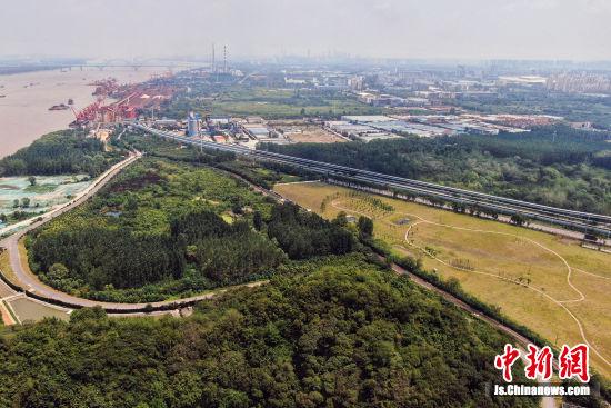 8月14日,航拍南京雨花台区长江畔三山矶一带,新栽种的树木已绿意葱茏。泱波 摄
