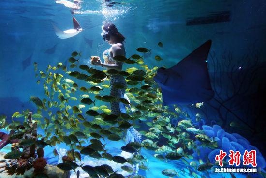 《寻金梦》的主题表演在南京海底世界上演。泱波 摄